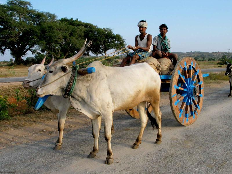 Milk and Draught breeds - Indigenous Breeds
